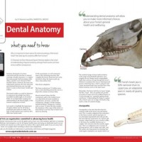 Equine Dental Anatomy - Part 2