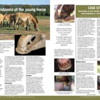 Dental Problems of the Young Horse